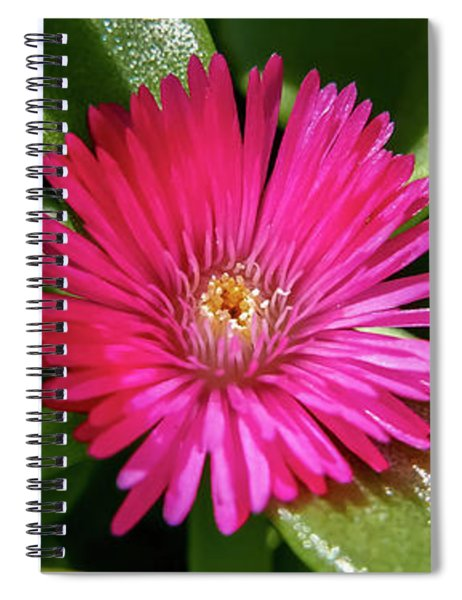 Humble And Proud Spiral Notebook