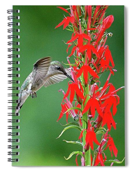 Hummer On Cardinal Flower Spiral Notebook