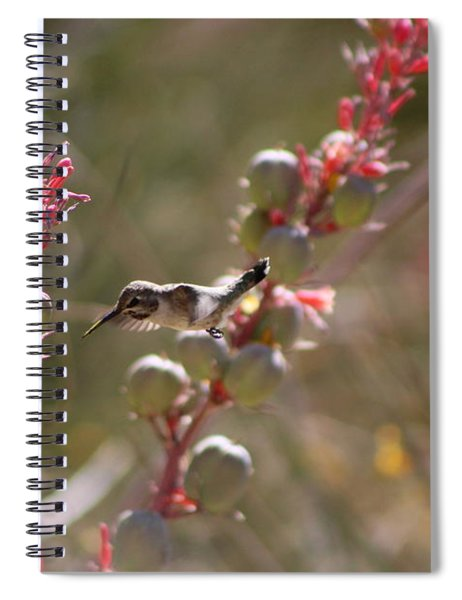 Hummingbird Flying To Red Yucca 1 In 3 Spiral Notebook