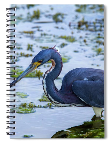 Hunt For Lunch Spiral Notebook