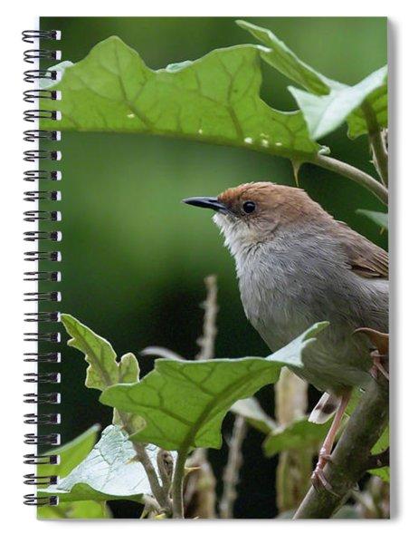 Hunter's Cisticola Spiral Notebook