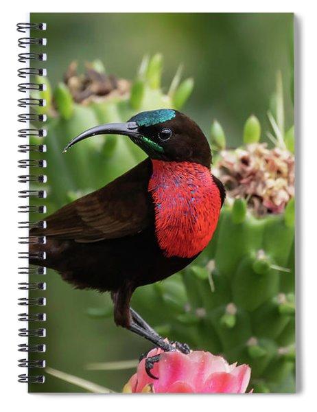Hunter's Sunbird Spiral Notebook