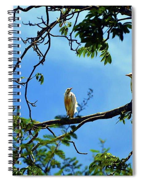 Ibis Perch Spiral Notebook
