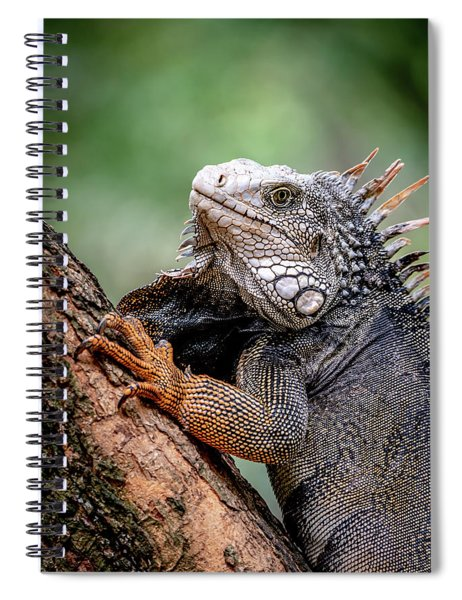 Iguana's Portrait Spiral Notebook