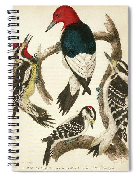 1. Red-headed Woodpecker. 2. Yellow-bellied Woodpecker. 3. Hairy Woodpecker. 4. Downy Woodpecker. Spiral Notebook