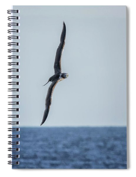 Immature Masked Booby, No. 5 Sq Spiral Notebook by Belinda Greb