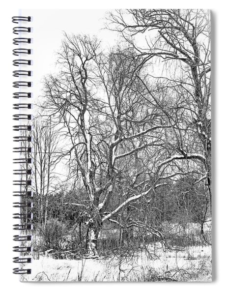 In Praise Of Willows 4 Bw Spiral Notebook