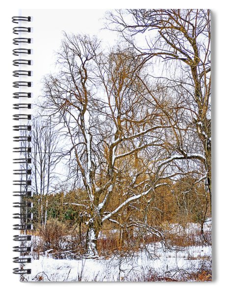 In Praise Of Willows 4 Spiral Notebook