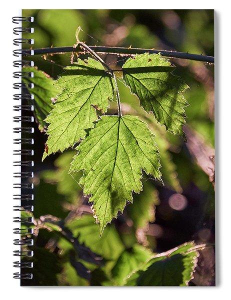 In Triplicate Spiral Notebook