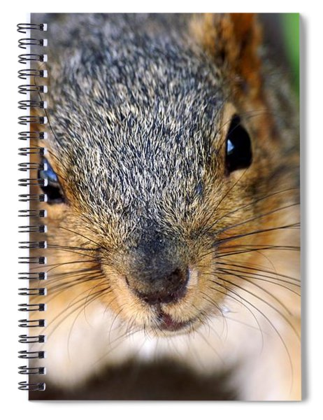 In Your Face Fox Squirrel Spiral Notebook