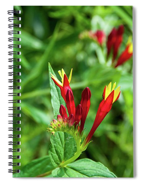 Indian Pink Spiral Notebook