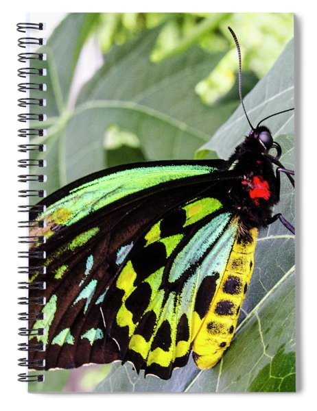 Insect Kaleidescope Spiral Notebook