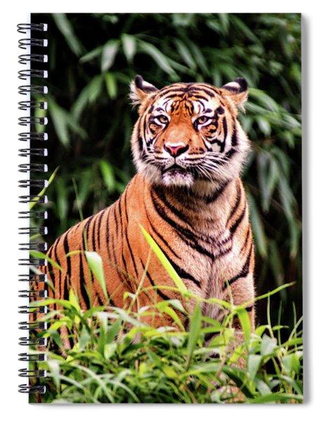 Intense Tiger Spiral Notebook