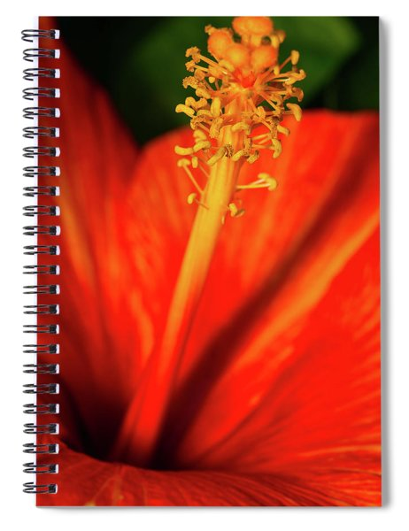 Into A Flower Spiral Notebook