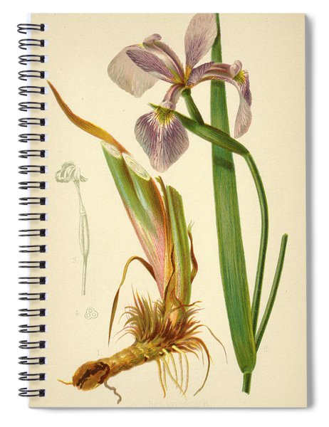 Iris Versicolor Blue Flag Spiral Notebook
