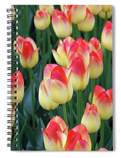 Irresistible Infatuation Spiral Notebook