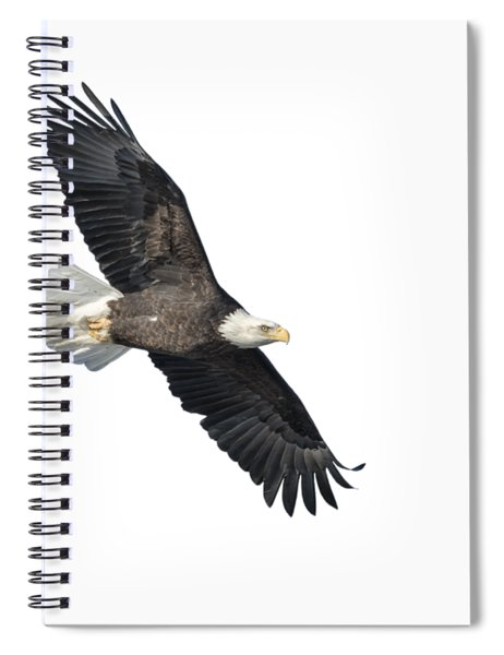 Isolated Bald Eagle 2018-2 Spiral Notebook