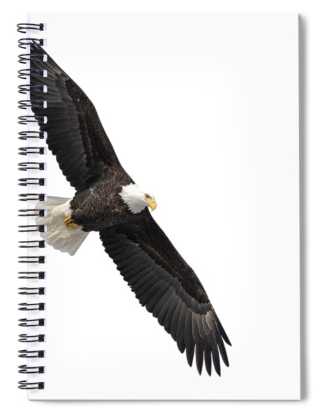 Isolated Bald Eagle 2019-1 Spiral Notebook