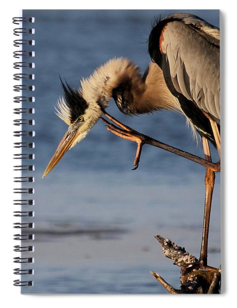 Itchy - Great Blue Heron Spiral Notebook