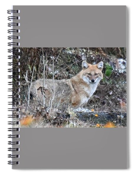 Jackal In The Indian Jungle - Himalayas Spiral Notebook