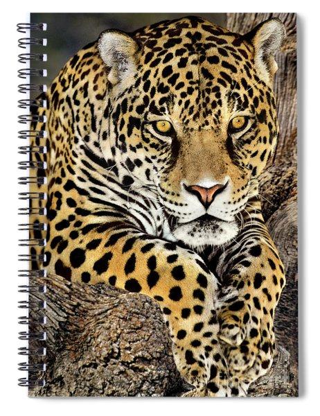 Jaguar Portrait Wildlife Rescue Spiral Notebook