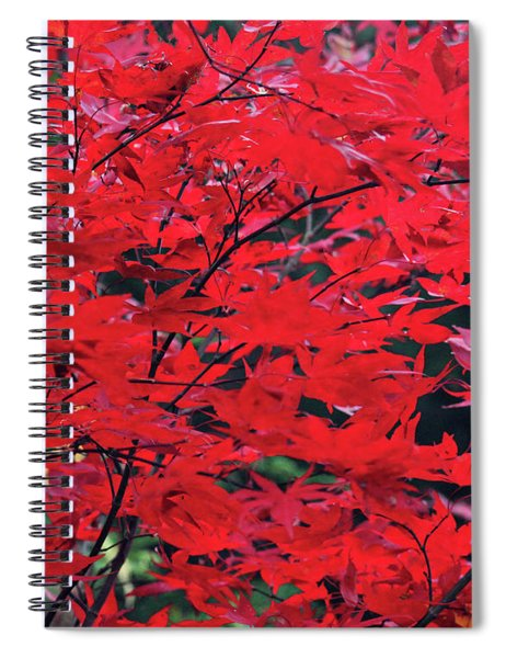 Japanese Maple In The Fall Spiral Notebook