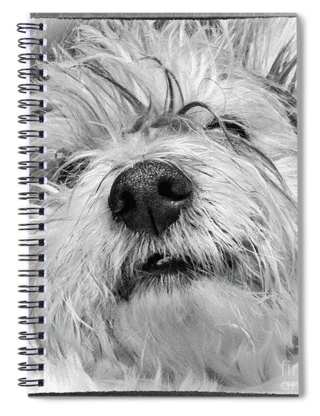 Coton De Tulear Dog Spiral Notebook