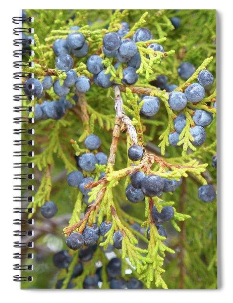 Juniper Berries Spiral Notebook