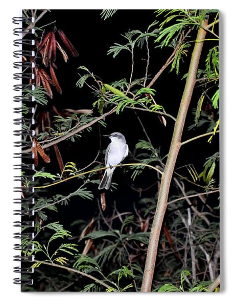 Kingbird At Night Spiral Notebook