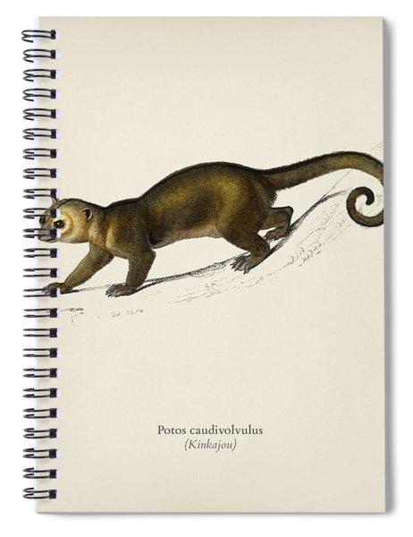 Kinkajou  Potos Caudivolvultrated By Charles Dessalines D  Orbigny  1806 1876 Spiral Notebook