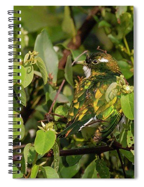 Klaas's Cuckoo Spiral Notebook