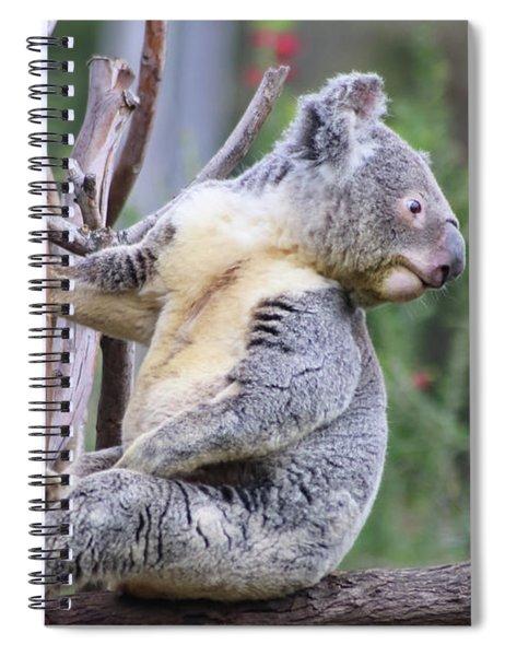 Koala In Tree Spiral Notebook