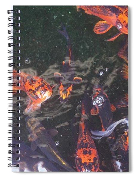 Koi In A Pond Spiral Notebook