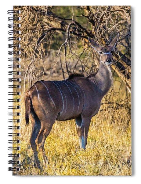 Kudu, Namibia Spiral Notebook