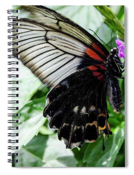 Lacey Elegance Spiral Notebook