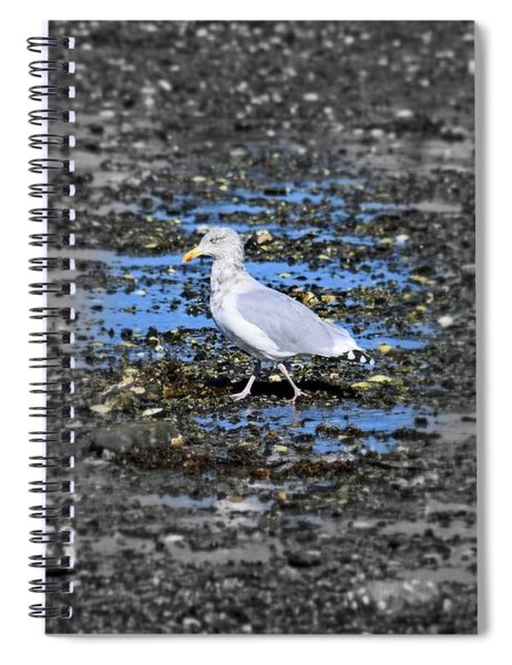 Land Bridge Gull Spiral Notebook by Patti Whitten