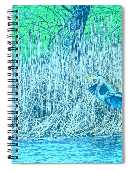 Landing Great Blue Heron Spiral Notebook