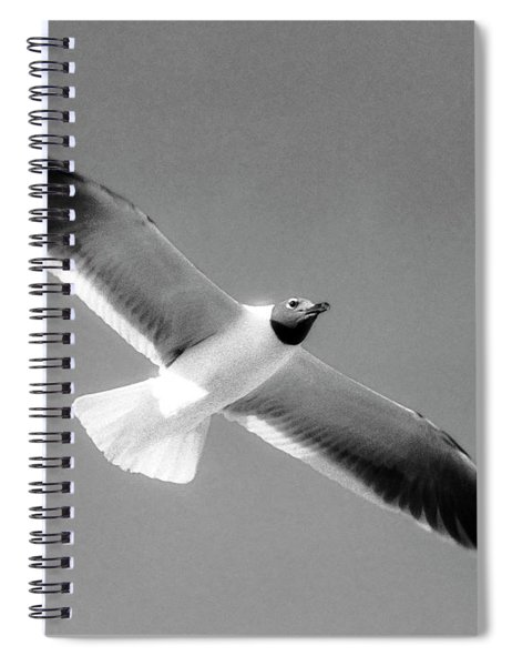 Laughing Seagull Spiral Notebook