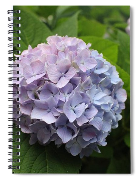 Lavender Hydrangea, Cape May Spiral Notebook