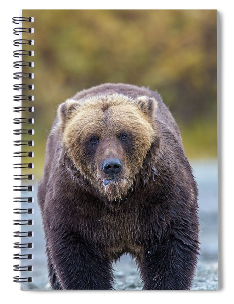 Lazy C Angry Bear  Spiral Notebook