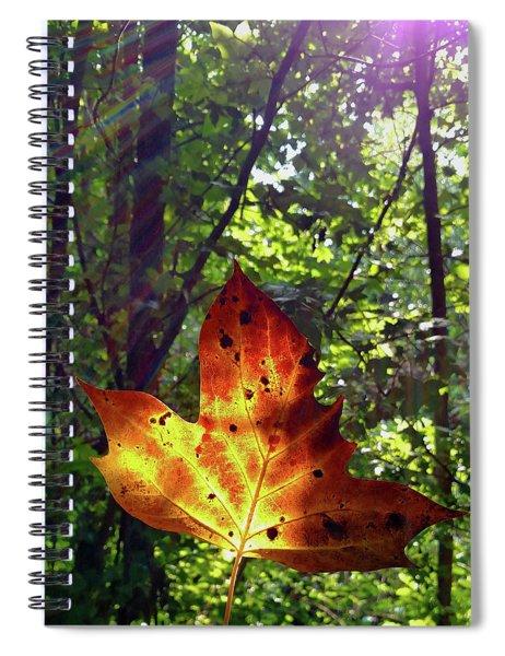 Leaf Aglow Spiral Notebook