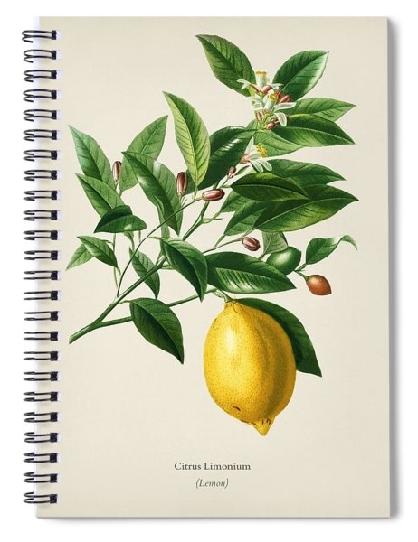 Lemon  Citrus Limonium Illustrated By Charles Dessalines D' Orbigny  1806-1876  Spiral Notebook