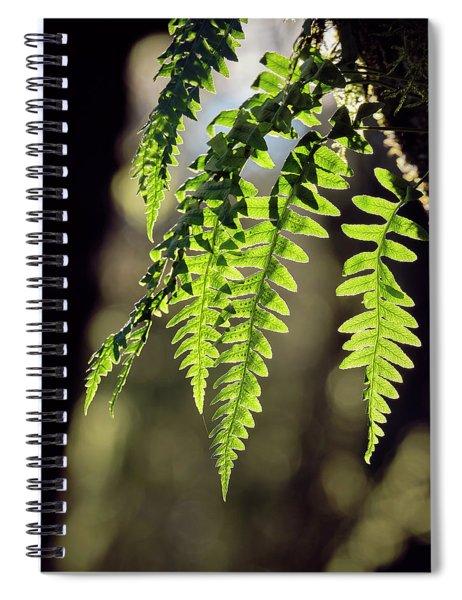 Licorice Fern Spiral Notebook