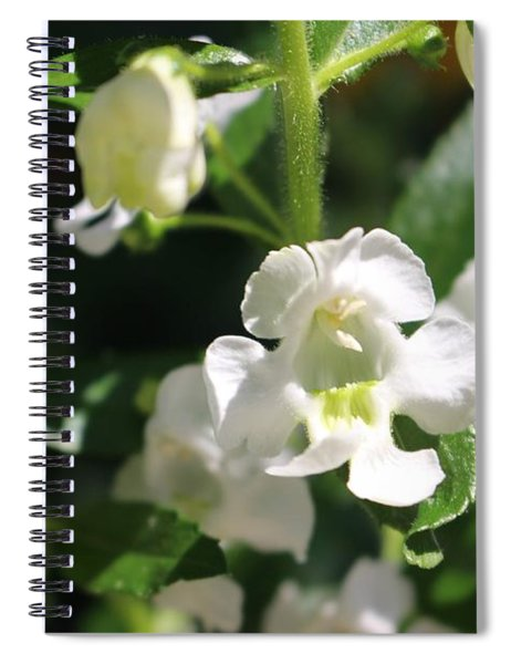 Lily Of The Valley, Cape May Spiral Notebook