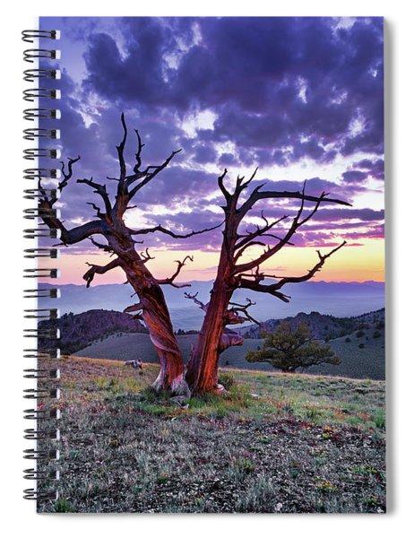 Limber Pine Sunset Spiral Notebook