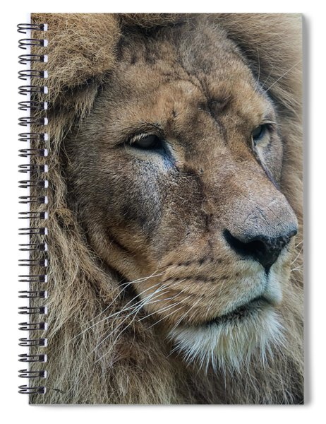 Spiral Notebook featuring the photograph Lion by Anjo Ten Kate