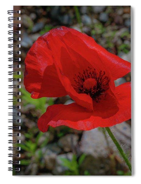Lone Red Flower Spiral Notebook