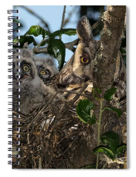 Long-eared Owl And Owlets Spiral Notebook