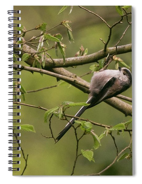 Long Tailed Tit Spiral Notebook