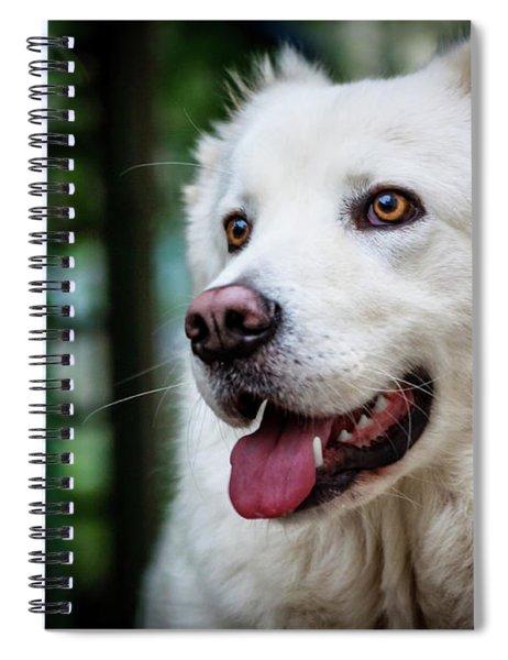 Looking Spiral Notebook